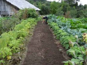 Formation agricole permaculture :  formation stage en permaculture